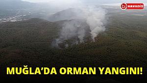 Muğla'da yıldırım düşmesi sonucu ortaya çıkan orman yangını kontrol altına alındı!..