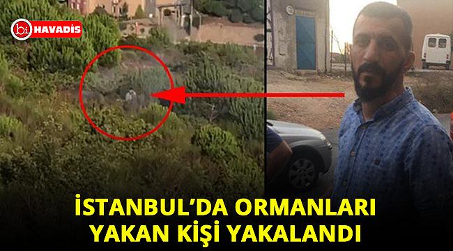 Son dakika: İstanbul'da orman yakan alçağın kim olduğu ortaya çıktı!